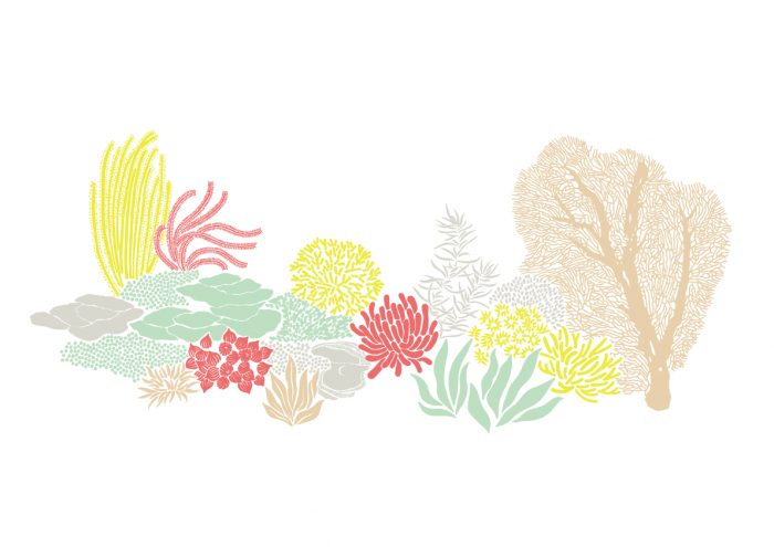 5つの海洋性美容成分